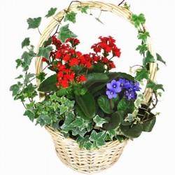African Violets Baskets