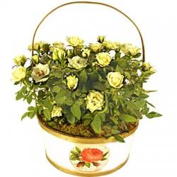 Corbeille de rosiers blances