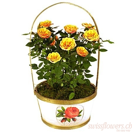 Rose Tree Orange