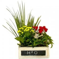 Plant H2O