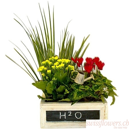Plante H2O