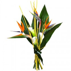 High Touch - Strelitzia and Callas