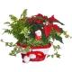 Etoile de Noël et Père Noël