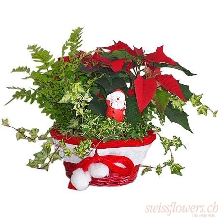 Weihnachtsstern und Weihnachtsmann