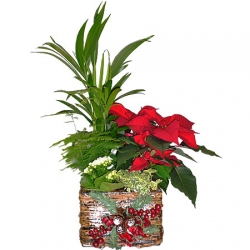 Poinsettia and Christmas Basket