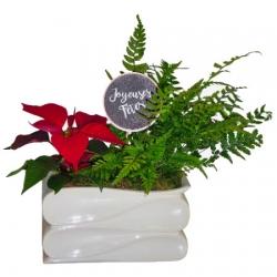 Poinsettia and Greenery