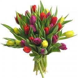Brassée de tulipes
