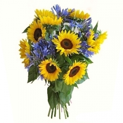 Sunflowers and Agapanthus