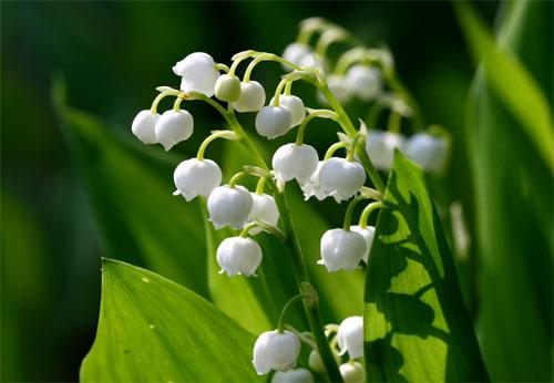 swissflowers---livraison-de-Fleurs-en-Su