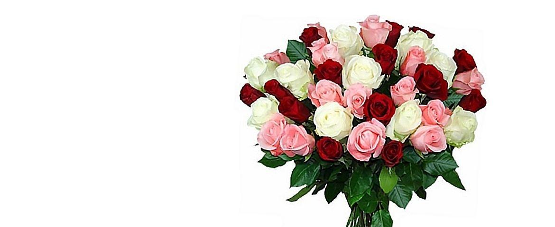 Fantastic roses