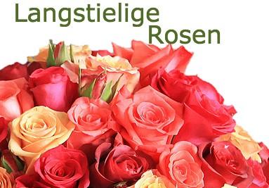 Langstielige Rosen